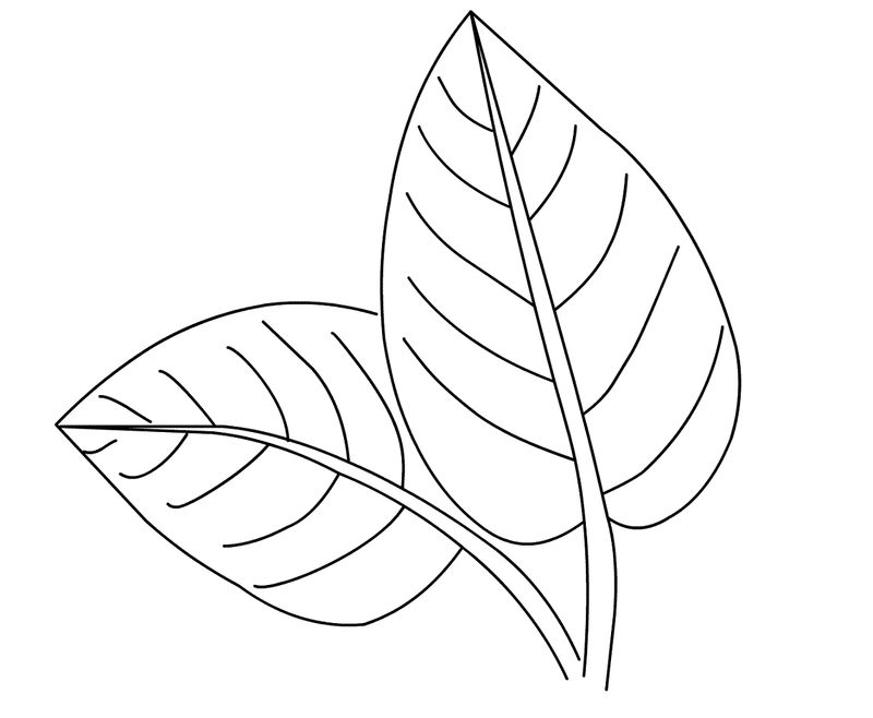 Leaf Coloring Pages To Print 001