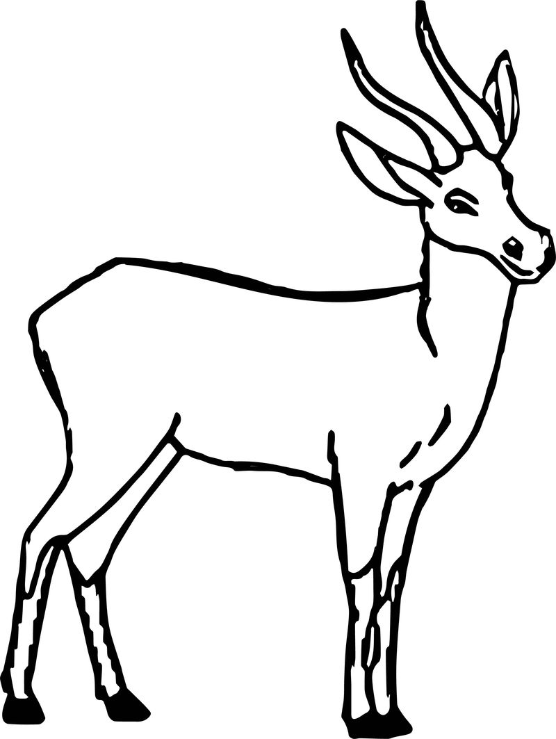 Lechwes Animal Coloring Page