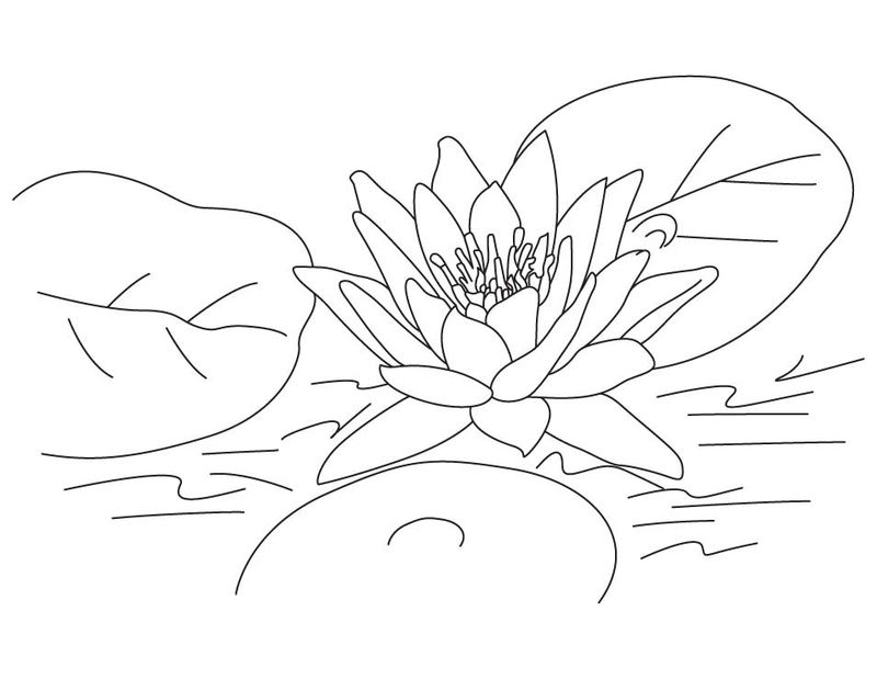 Lotus Flower Coloring Pages Pictures 001