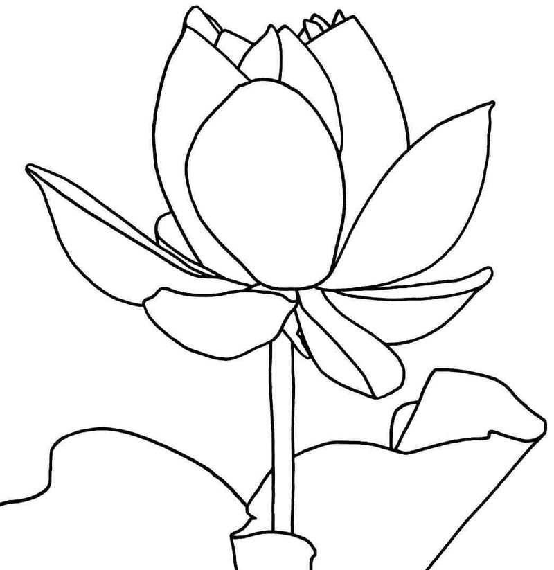 Lotus Flower Coloring Pages Printable 001
