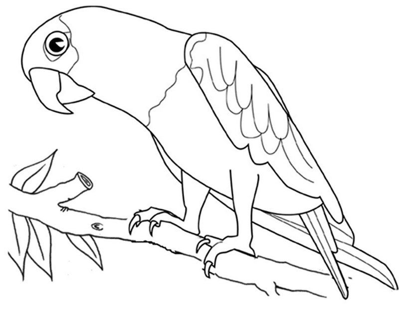 Macaw Parrot Bird Coloring Page