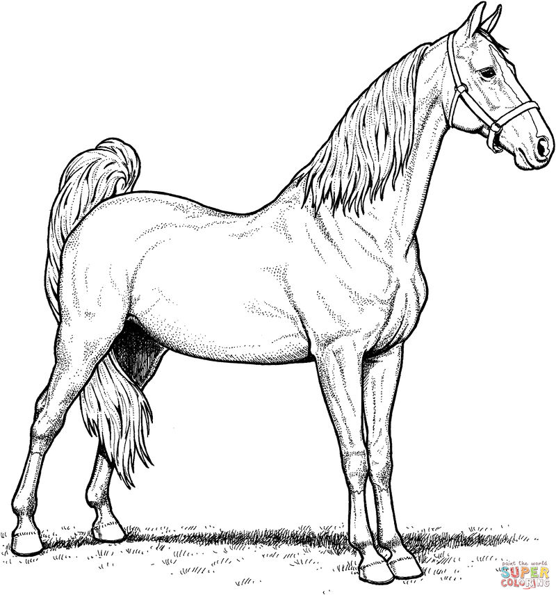 Mare Horse Coloring Page