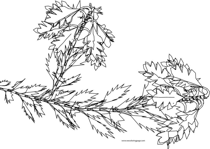 Nepalenweed Flower Coloring Page