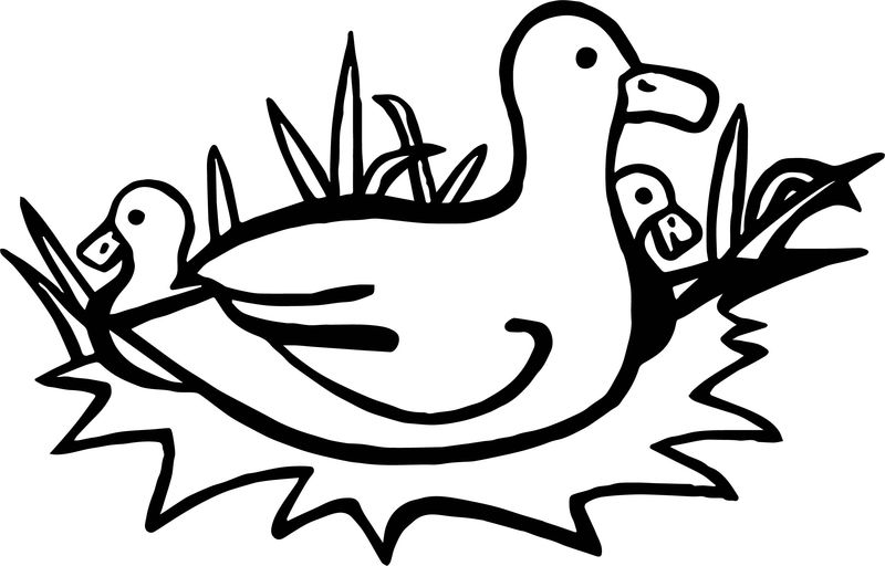 New Duck Coloring Page