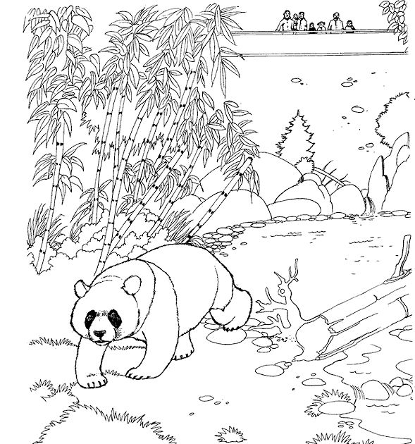 Panda Zoo Animals Coloring Pages