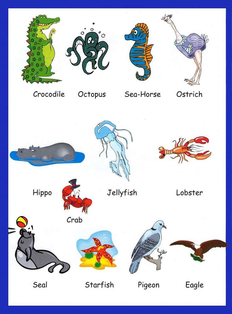 Pictionary Words For Kids For Animals