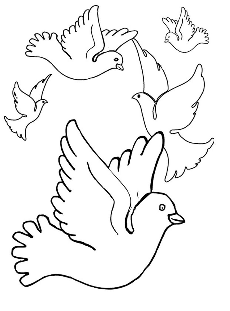 Pigeon Coloring Page Printable 001
