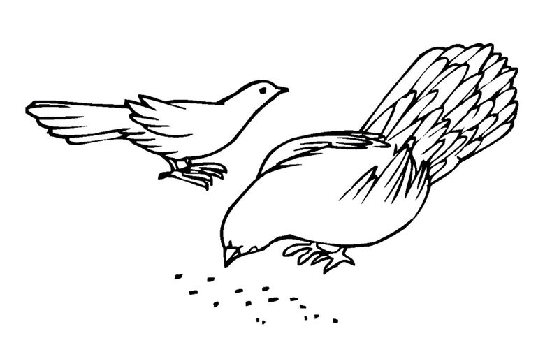 Pigeon Coloring Pages Images 001