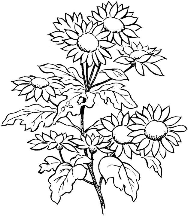 Print Flower Coloring Pages For Adults