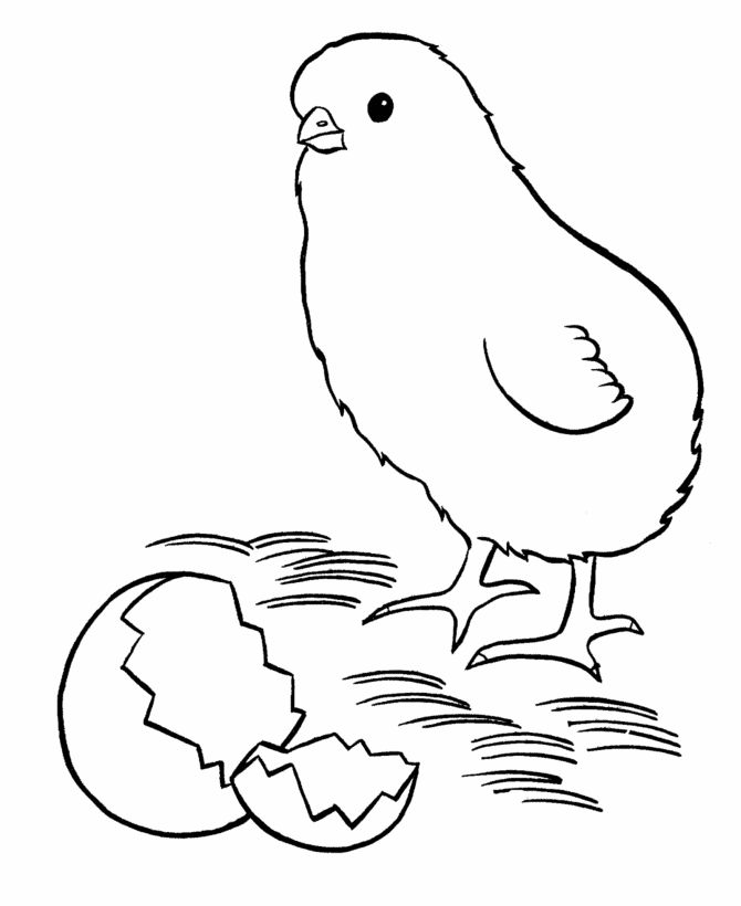 Printable Chick Coloring Pages