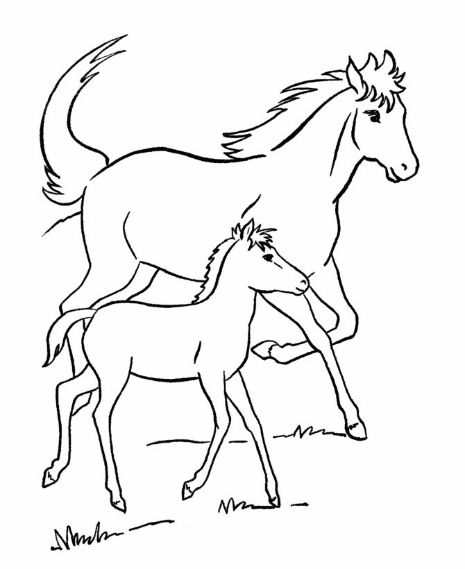 Printable Coloring Pages Horses