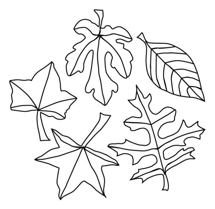 Printable Fall Leaves Coloring Pages