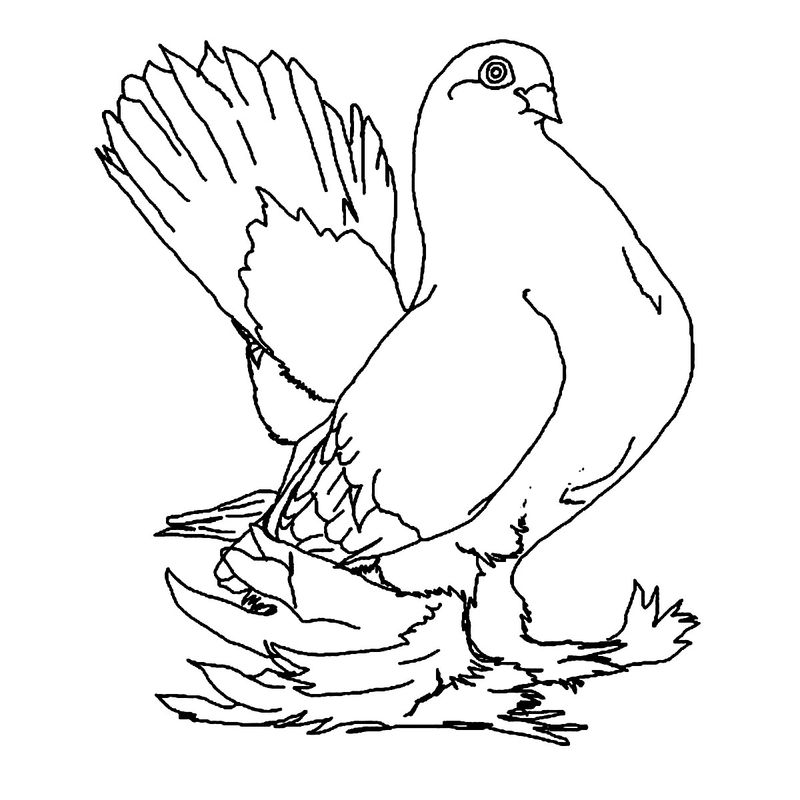 Printable Pigeon Coloring Page 001