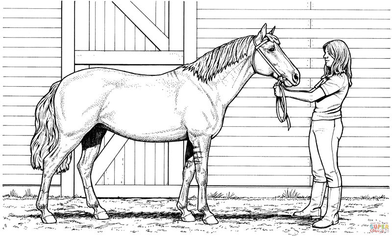 Printable Realistic Horse Coloring Page