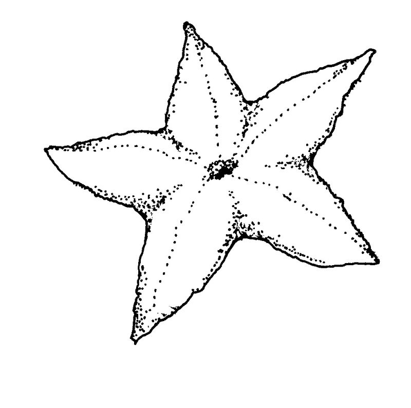 graphic regarding Printable Starfish named Printable Starfish Coloring Webpages Free of charge COLORING Web pages