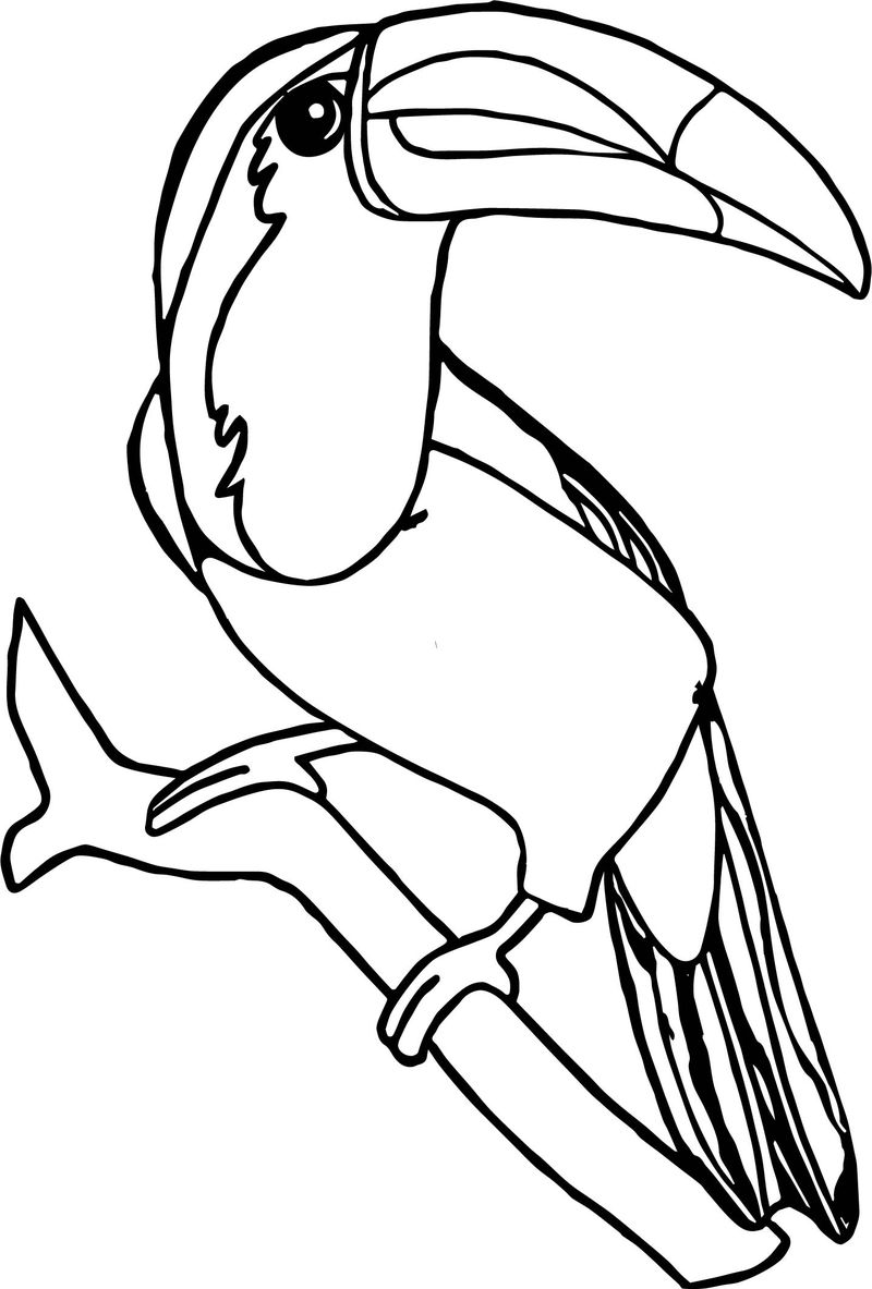 Rainforest Toucan Bird Coloring Page