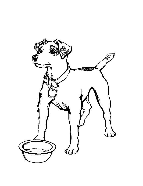 Real Dog Coloring Pages