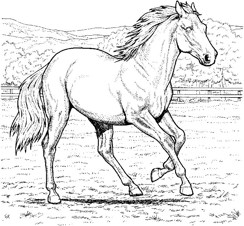 Real Horse Coloring Pages