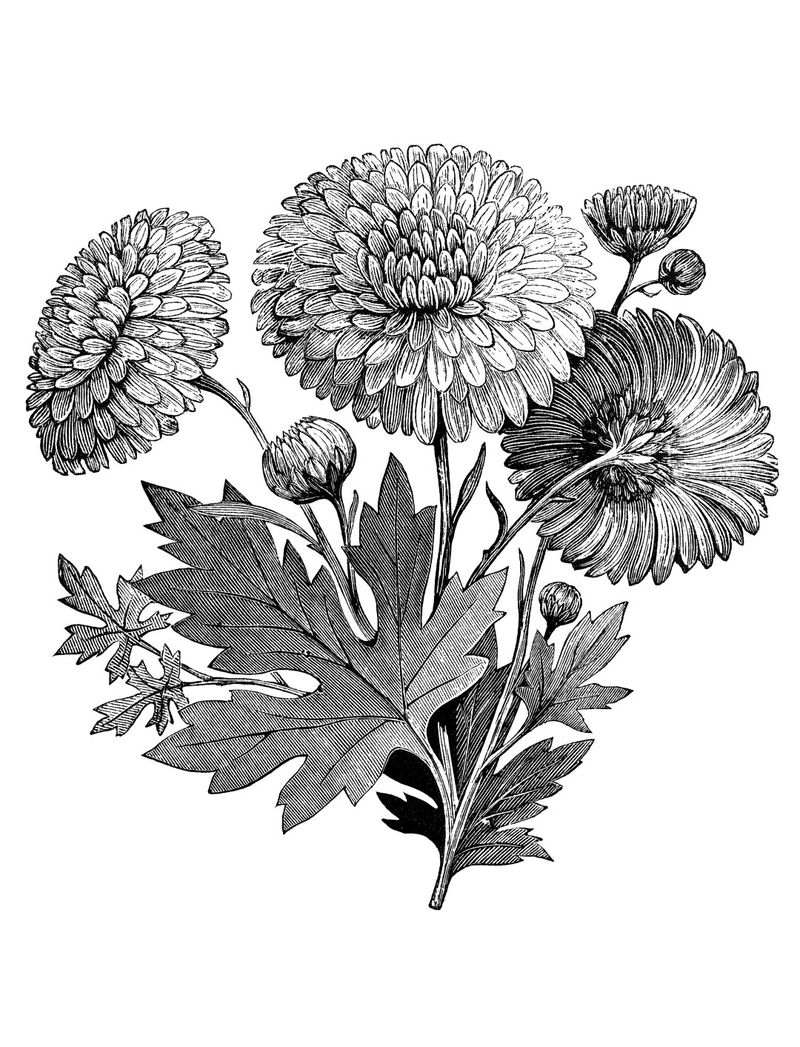 Realistic Flower Coloring Page