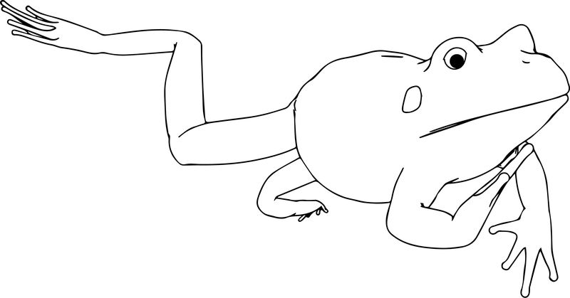 Realistic Frog Black White Coloring Page