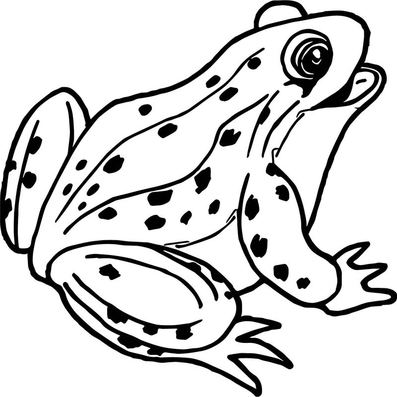 Realistic Frog Coloring Page