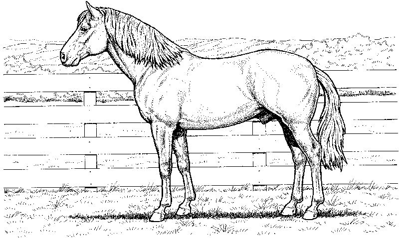 Realistic Horse Coloring Pages 1