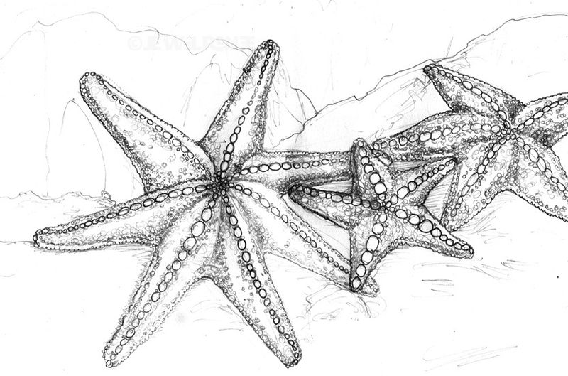 Realistic Starfish Coloring Page