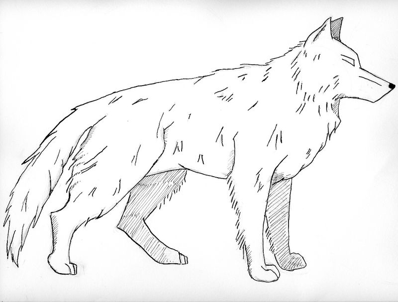 Realistic Wolf Coloring Pages