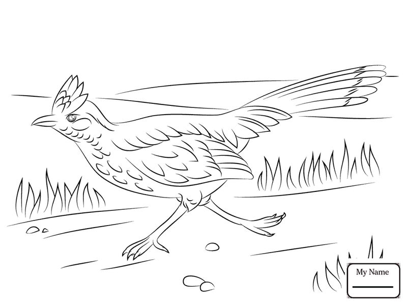 Roadrunner Bird Coloring Pages