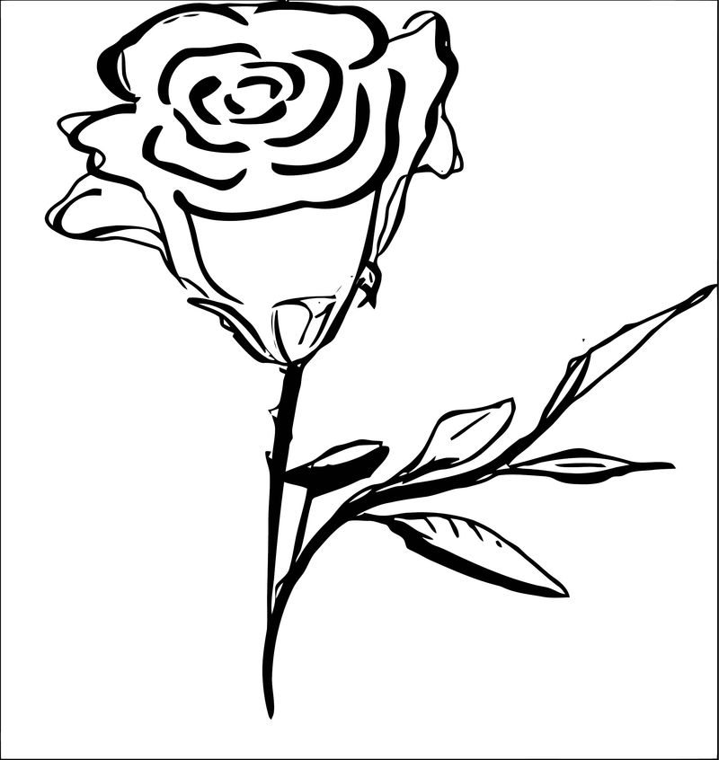 Rose Flower Coloring Page 049