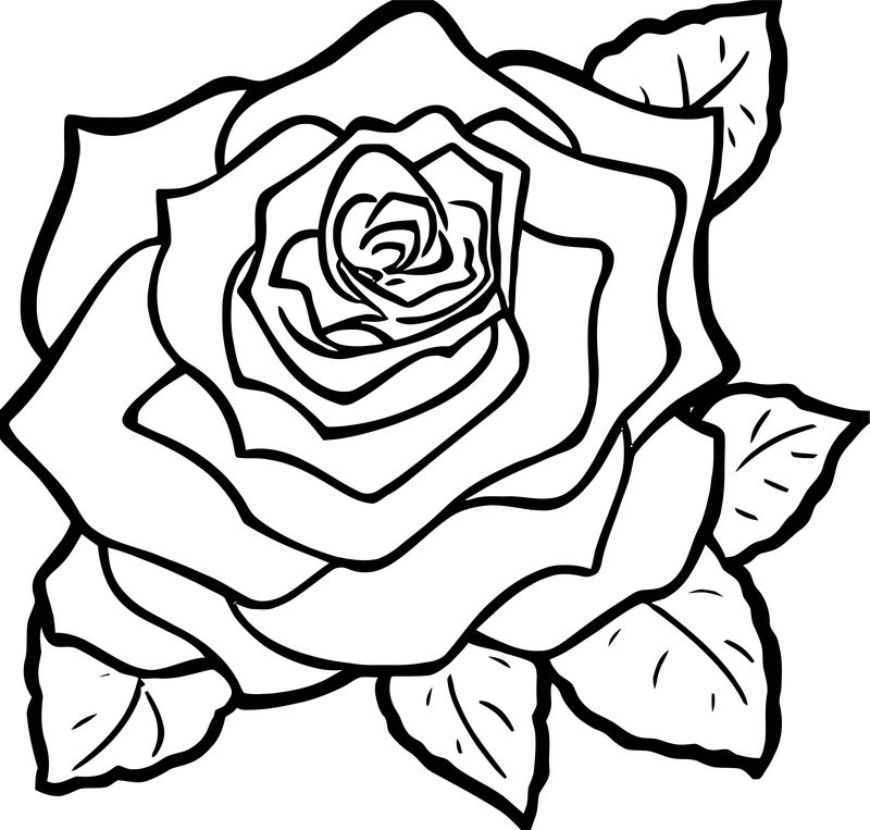 Rose Flower Coloring Page 147