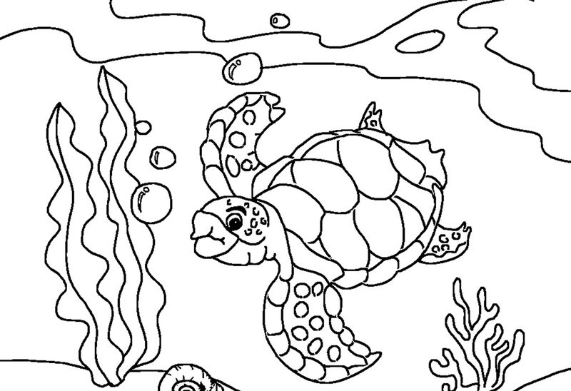 Sea Turtles Coloring Pages