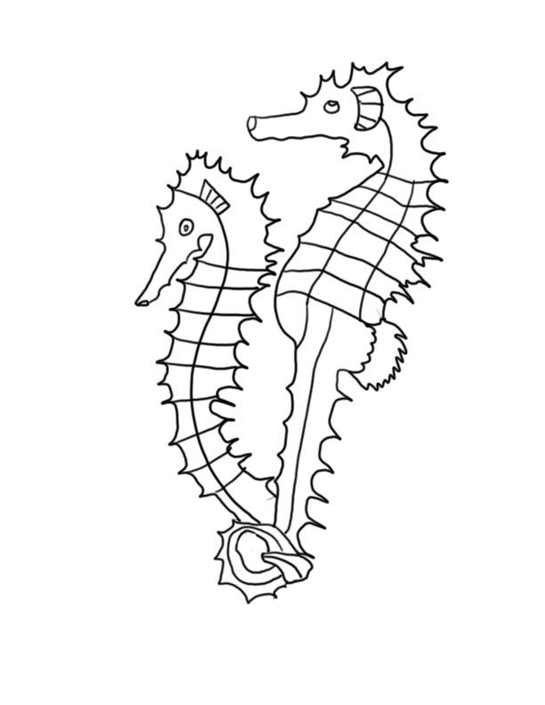 picture about Seahorse Printable referred to as Seahorse Coloring Webpages Printable Absolutely free COLORING Web pages