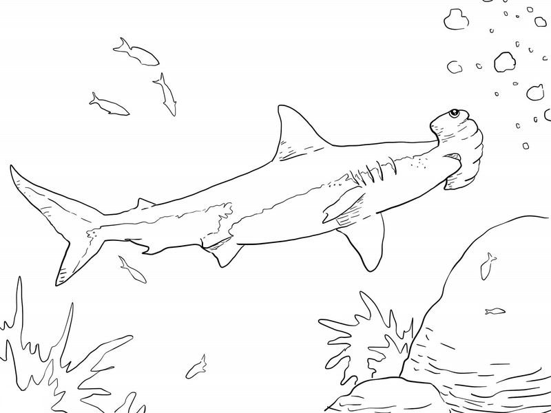 Shark color pages hammerhead 001