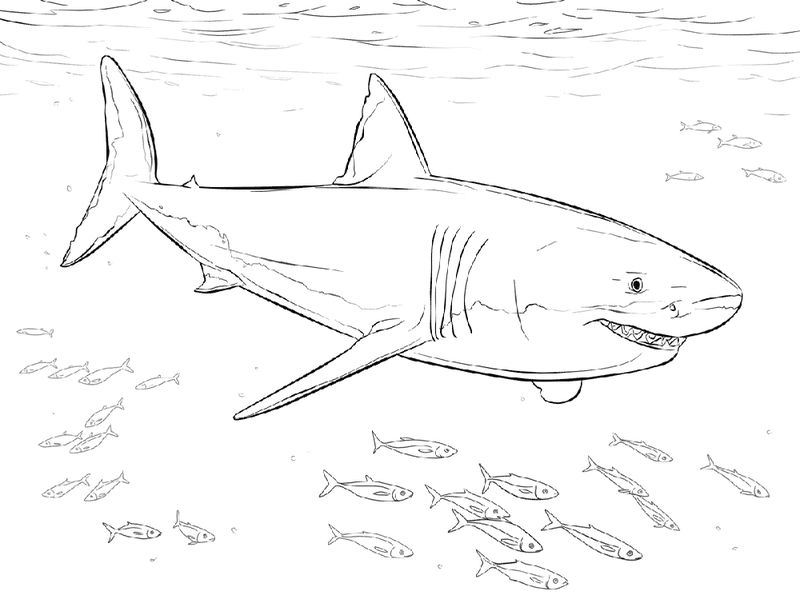 Shark Color Pages Printable