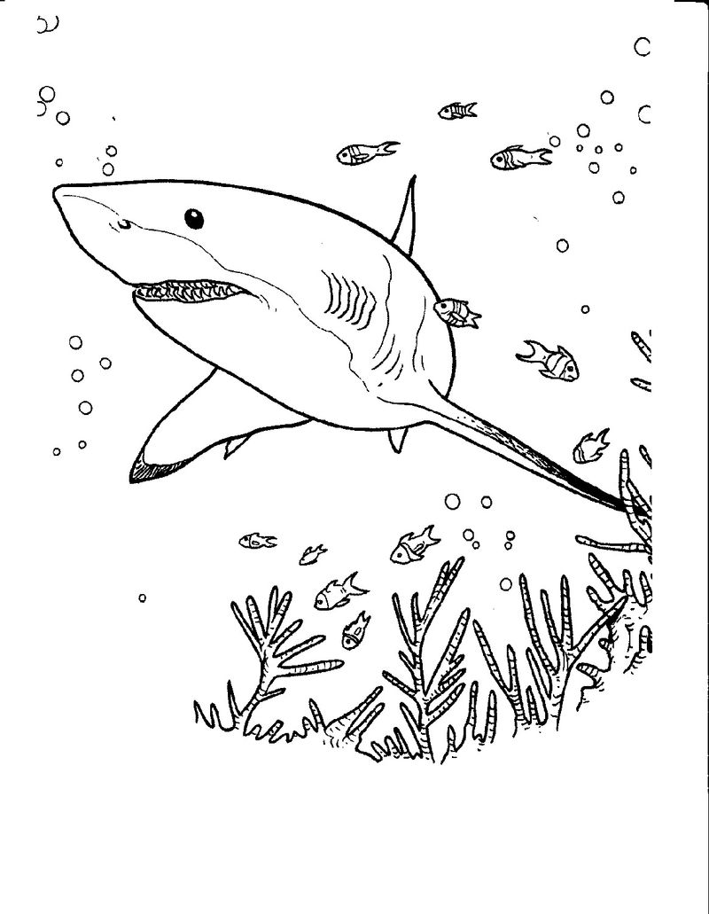 Shark Color Pages Sea