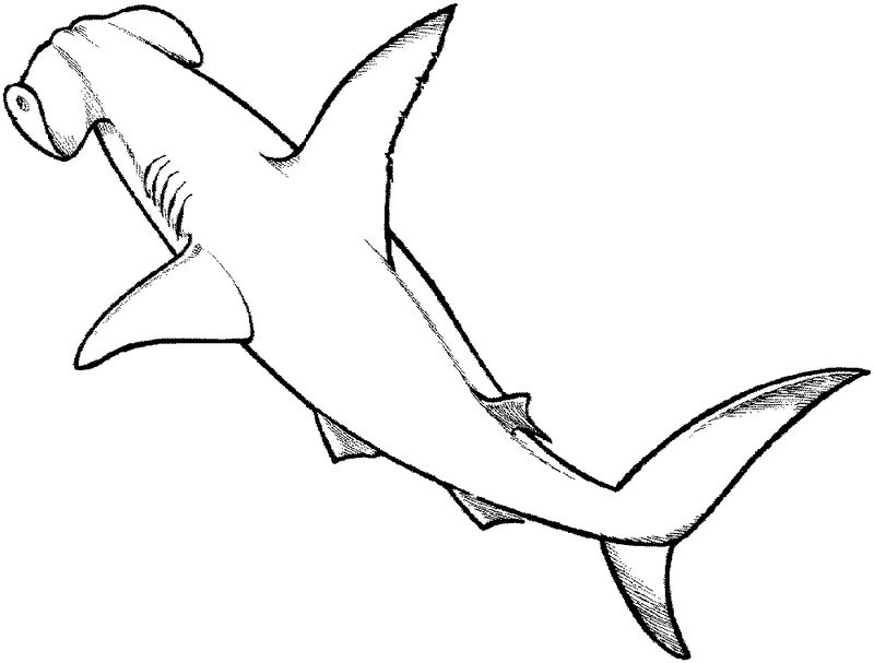 Shark Color Pages Wild