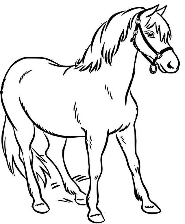 Simple Real Horse Coloring Page