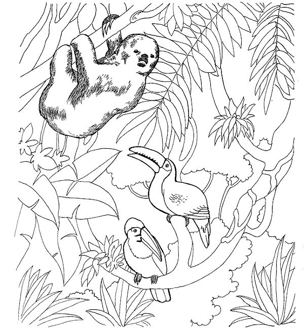 Sloth Zoo Animals Coloring Pages