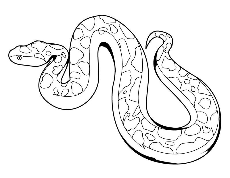 Snake Zoo Animals Coloring Pages