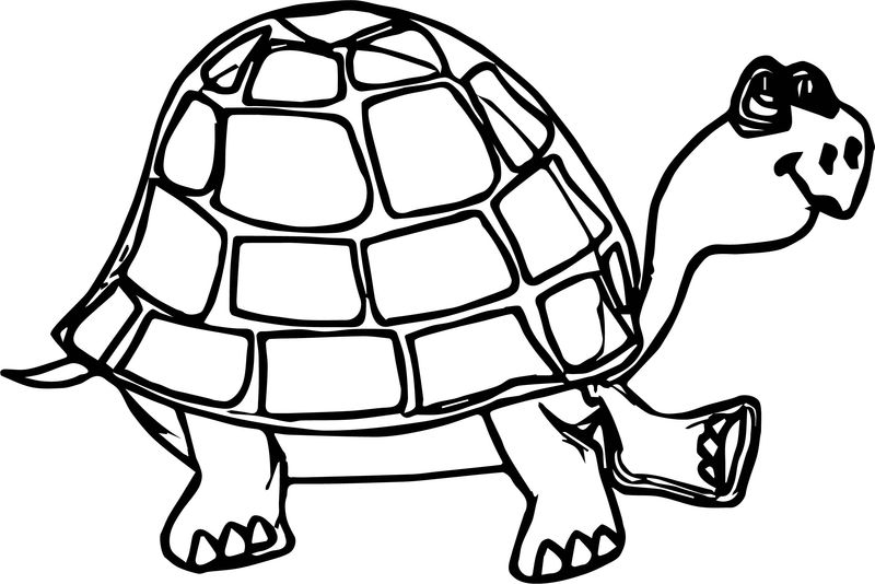 Sour Tortoise Turtle Coloring Page
