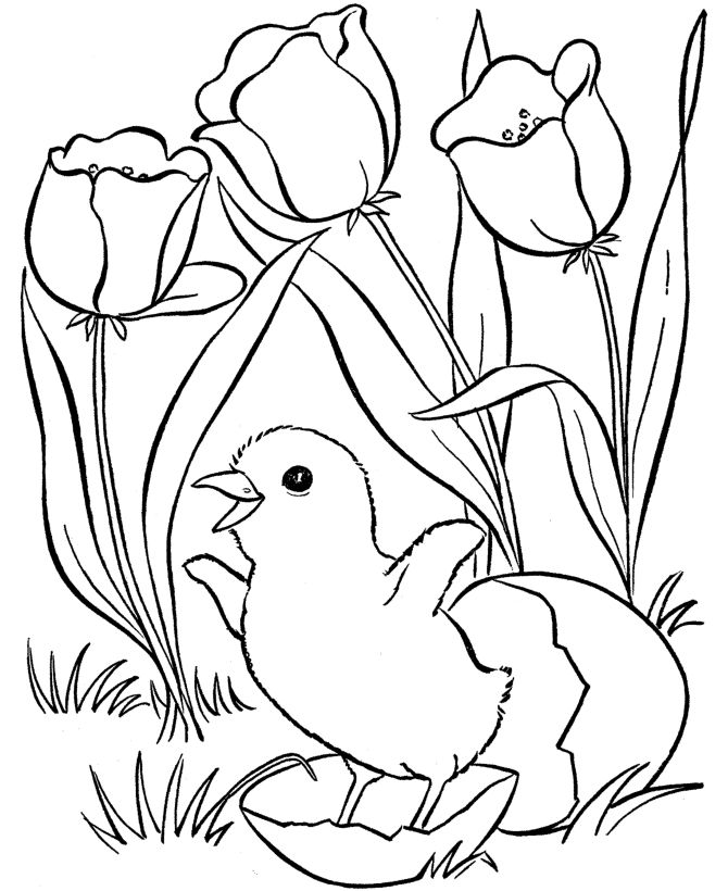 Spring Coloring Pages Tulips And Egg 001