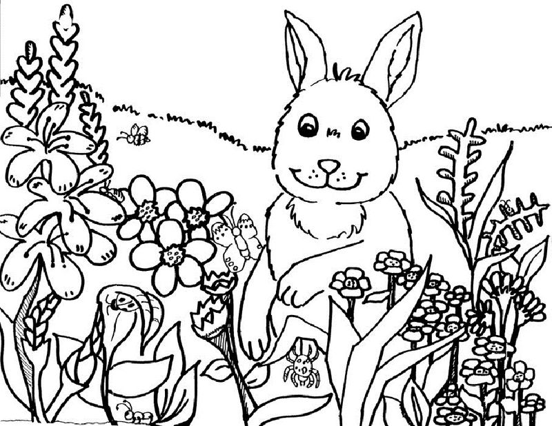 Spring Coloring Pictures For Kindergarten