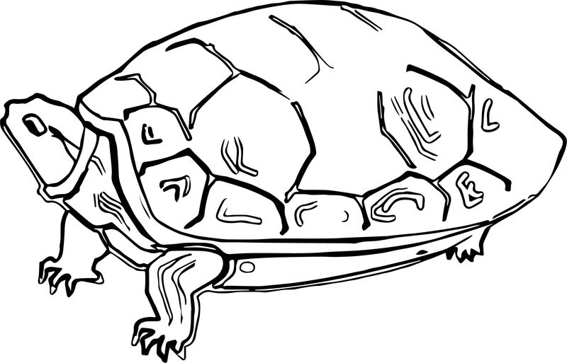 Stale Tortoise Turtle Coloring Page