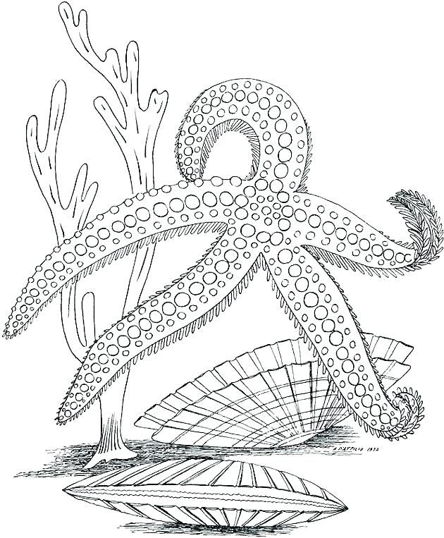 Starfish Ocean Coloring Page