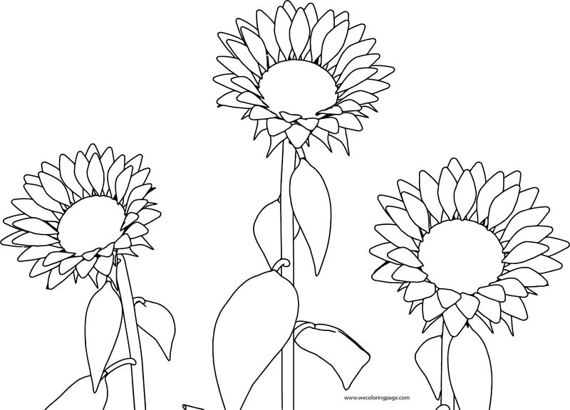 Sun Flower Coloring Page 06