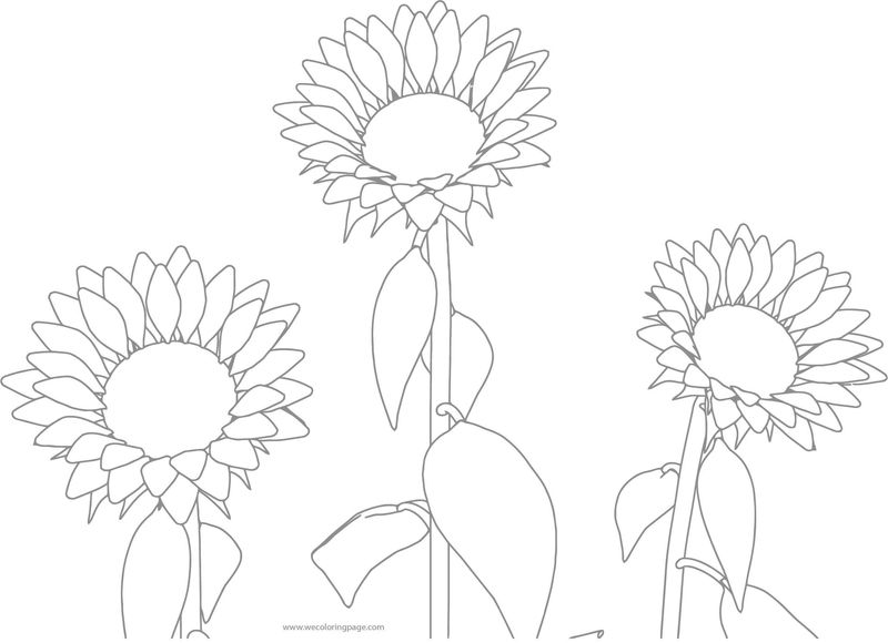 Sun Flower Coloring Page Gray