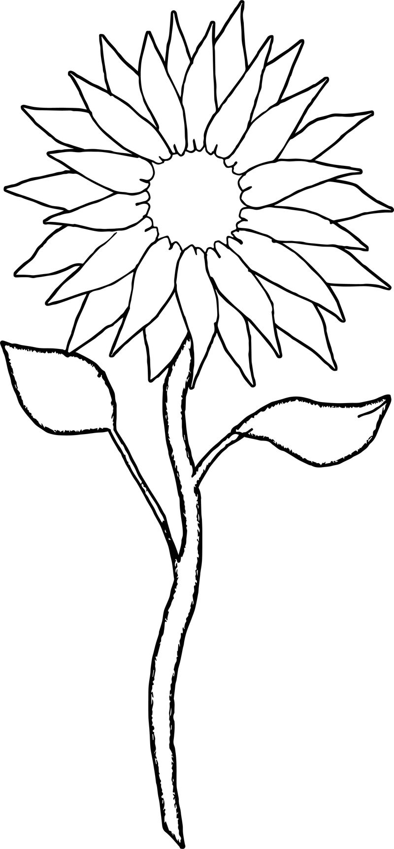 Sunflower Two Coloring Page
