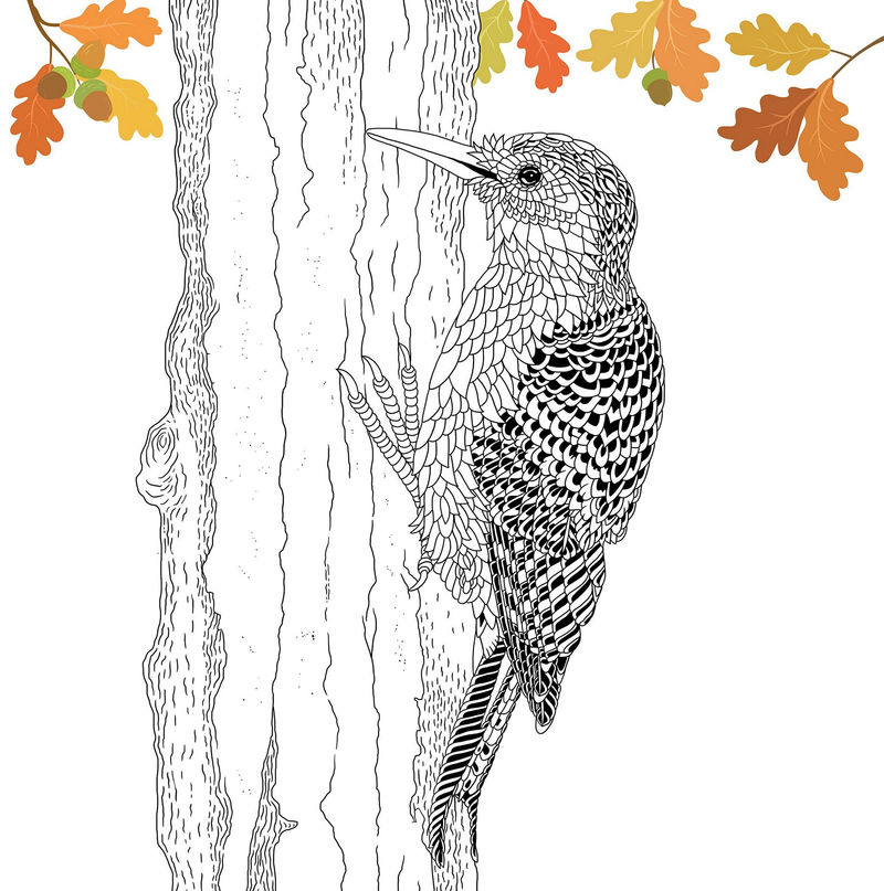 The Aviary Bird Portraits Coloring Book Hummingbirds