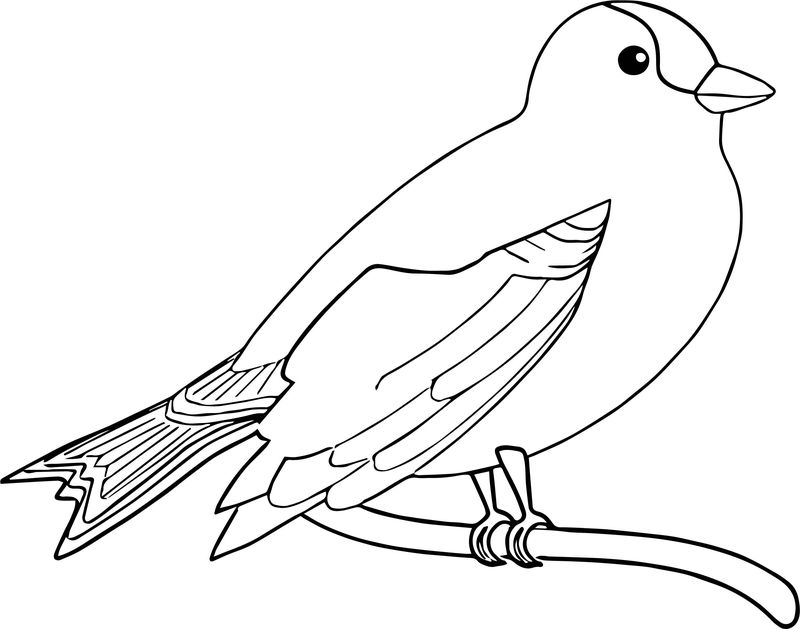 The Bird Coloring Page